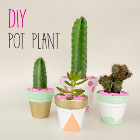 DIY : DECORATIVE POT PLANTS