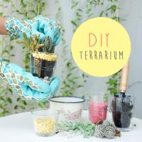 DIY : Terrarium