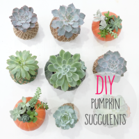 DIY (HALLOWEEN EDITION) : Pumpkin Succulent